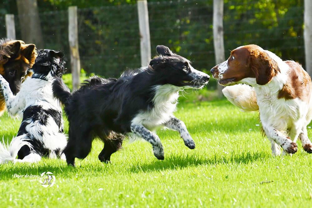Honden en hun taal